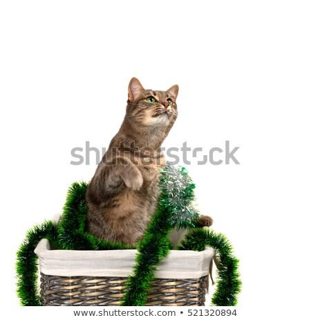 kat · christmas · decoratie · kitten · Rood - stockfoto © bsani