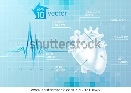 Kardio orvosi kék illusztráció szív pulzáló Stock fotó © alexaldo