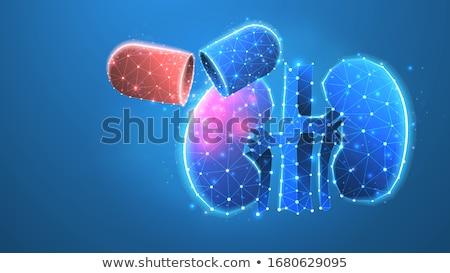 Anatómia illusztráció absztrakt kék orvosi vér Stock fotó © Tefi