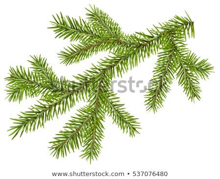 zöld · fenyő · gyönyörű · tél · szín · tájkép - stock fotó © orensila