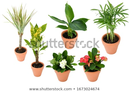 Different types of exotic palm trees stock photo © bluering