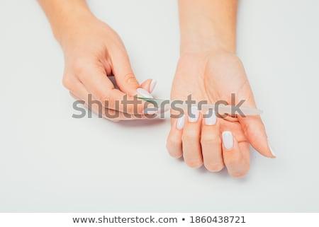 Masaustu cicek resimleri 7 pelautscom picture