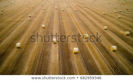 Traktör saman balya Stok fotoğraf © stevanovicigor