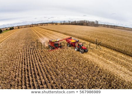 Corn maize harvest, aerial view of tractor and combine harvester Stock photo © stevanovicigor
