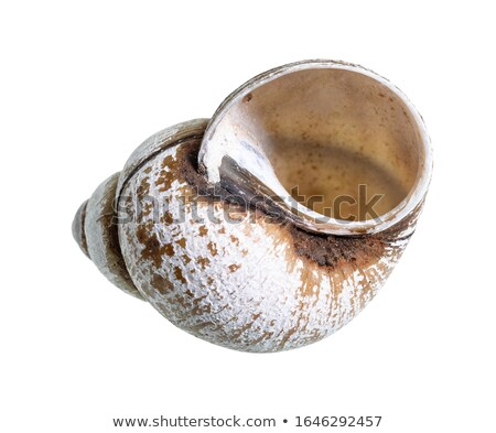 Snail with shell on back Stock photo © orensila