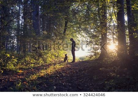 Man lopen hond bos voorjaar landschap Stockfoto © Kotenko