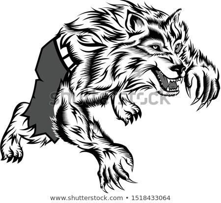 怒っ 狼 漫画のマスコット 文字 孤立した 白 ストックフォト © hittoon