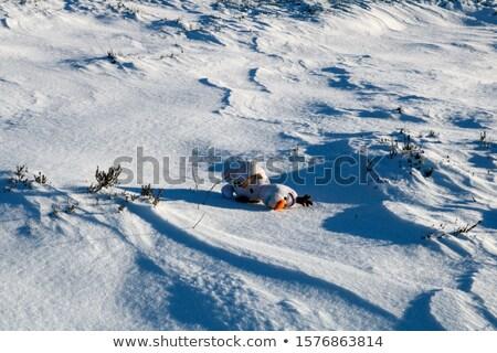 Verlaten sneeuwpop winter leuk recreatie sjaal Stockfoto © IS2