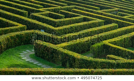 Outdoor Garden Hedge Maze Stock photo © lenm