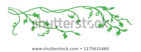 Green Wave Vine Flourishes Background Stock photo © cteconsulting