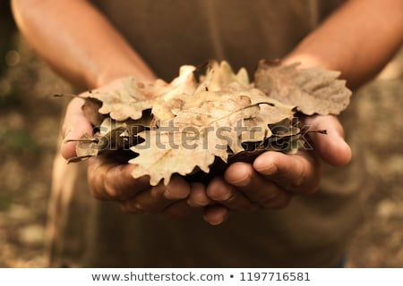 man with a dry leaf in his hand Stock photo © nito