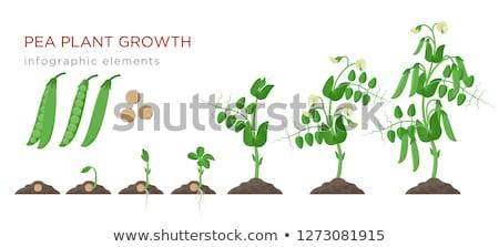 verde · ervilhas · folhas · branco · comida · planta - foto stock © virgin