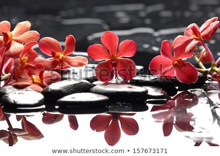 Foto d'archivio: Bella · orchidea · superficie · dell'acqua · dettaglio · fiore · nice