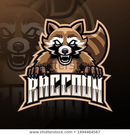 Cartoon Angry Raccoon Stock photo © cthoman