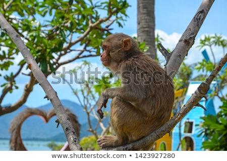 Monkey island Stock photo © colematt