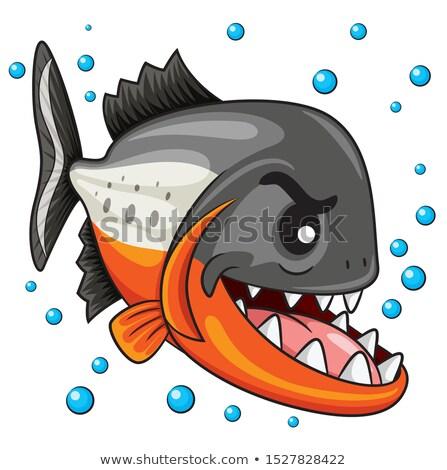 Faminto desenho animado piranha ilustração olhando sorridente Foto stock © cthoman
