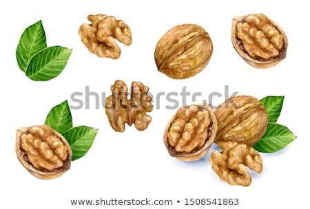Walnut on brown background. Watercolor illustration Stock photo © ConceptCafe