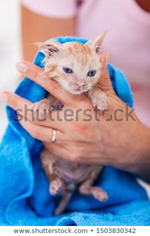 Woman hands gently dry wet kitten after bath Stock photo © ilona75