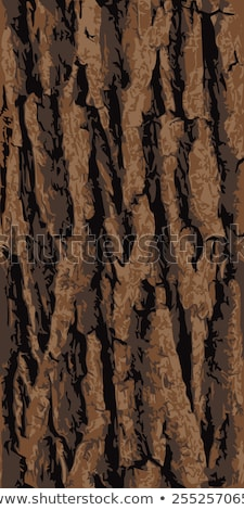 tree bark structure, grunge wood texture. vector illustration. Stock photo © kyryloff