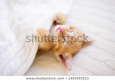 Bebek kedi yavrusu çok güzel oturma yalıtılmış Stok fotoğraf © ajn