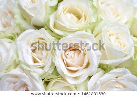 закрывается · капли · роса · бутон · цветок · весны - Сток-фото © offscreen