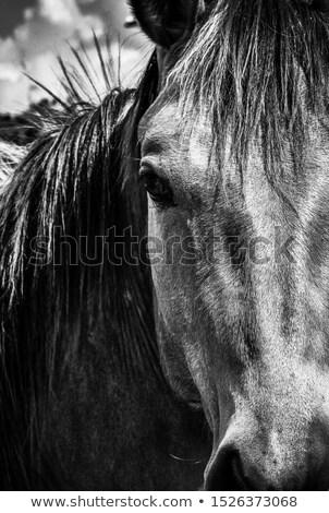Konia w górę blisko ekstremalnych obraz Zdjęcia stock © alexeys