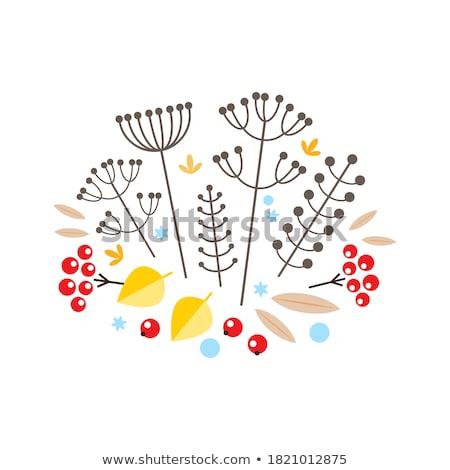 variatie · sneeuwvlokken · illustratie · abstract · Blauw - stockfoto © beholdereye