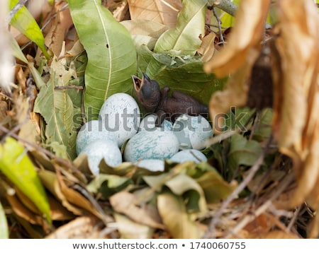 vicces · baba · papagáj · rajzfilmfigura · izolált · fehér - stock fotó © RAStudio