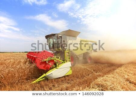 Cosecha saskatchewan caída granja amarillo frescos Foto stock © pictureguy