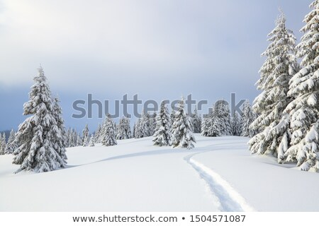 Tree and snowdrift Stock photo © Kotenko