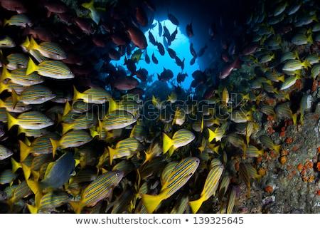 école Costa Rica subaquatique tropicales plongée Scuba Photo stock © MojoJojoFoto