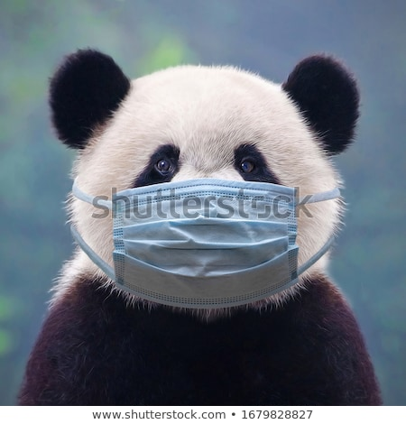 giant panda bear stock photo © kawing921