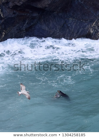 Stock photo: Two seagulls in St. Ives, Cornwall England.
