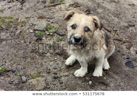 Sweet and sad abandoned dog looking at camera  Stock photo © stokkete