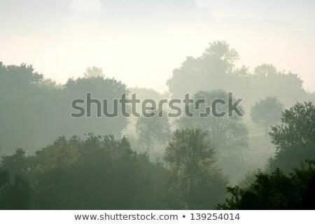 Morning mist in rural Italy. Ponzano Romano stock photo © Escander81