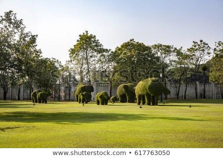 Gesneden dier park knal pijn Stockfoto © meinzahn