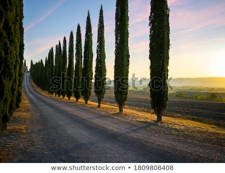 Toscano paisagem Itália casa campo fazenda Foto stock © gemenacom
