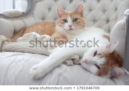 ölel · macskák · piros · zöld · fű · szeretet · fű - stock fotó © meinzahn