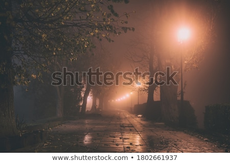 Foggy park alley with benches on night Stock photo © pixachi