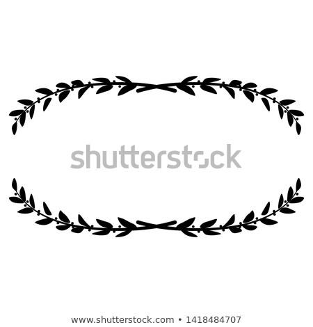 лавры дерево лист изолированный белый Сток-фото © claudiodivizia