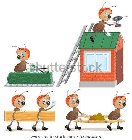Set ant builder isolato illustrazione vettore Foto d'archivio © orensila