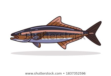 Renk örnek balık doğa deniz sanat Stok fotoğraf © Morphart
