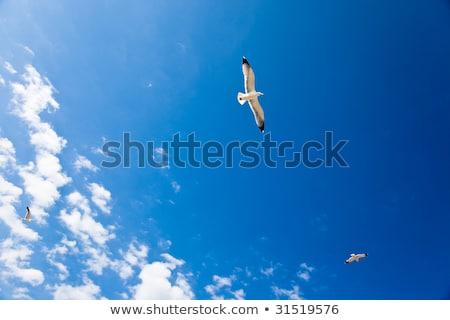 Profundo blue sky gaivota belo branco nuvens Foto stock © RuslanOmega