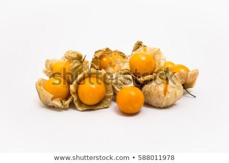 yalıtılmış · beyaz · çiçek · arka · plan · turuncu · kış - stok fotoğraf © mcherevan