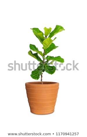red Pot isolated on white Stock photo © shutswis