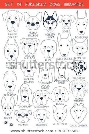 Conjunto 24 ícones preto comida cão Foto stock © angelp