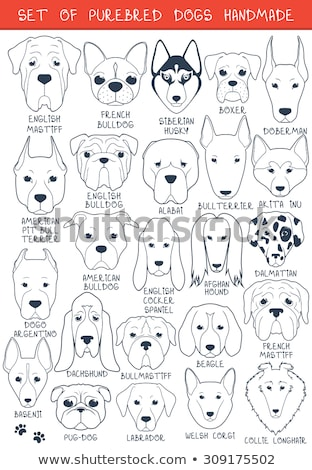 set of 24 dog breeding stock photo © angelp