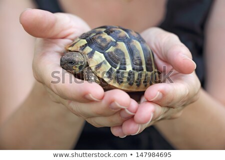 Turtles in the hands of a woman Stock photo © smuki