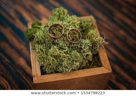 Trouwringen bonsai tak mooie groene boom bruiloft Stockfoto © O_Lypa