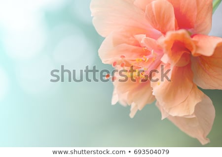 beautiful flower queen stock photo © svetography